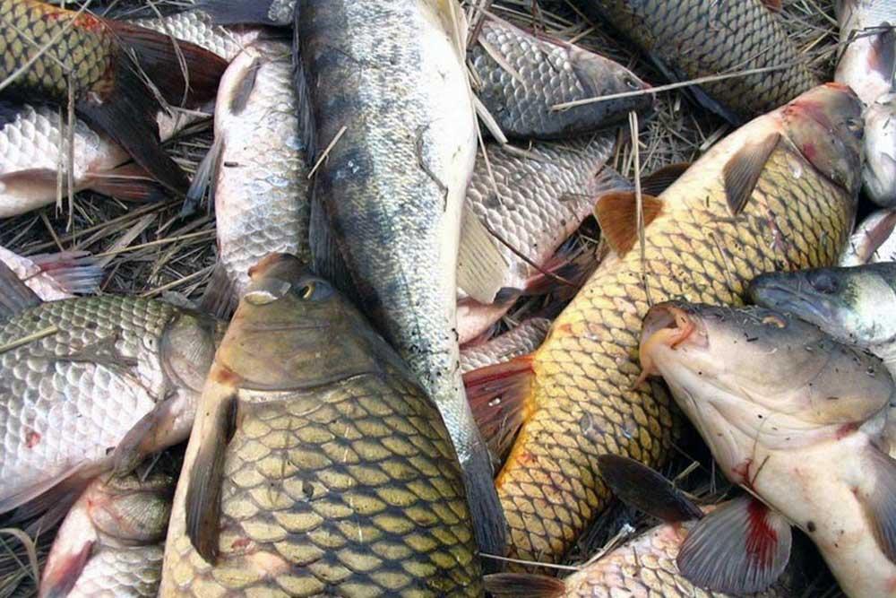 Запретные места для рыбалки в астраханской области